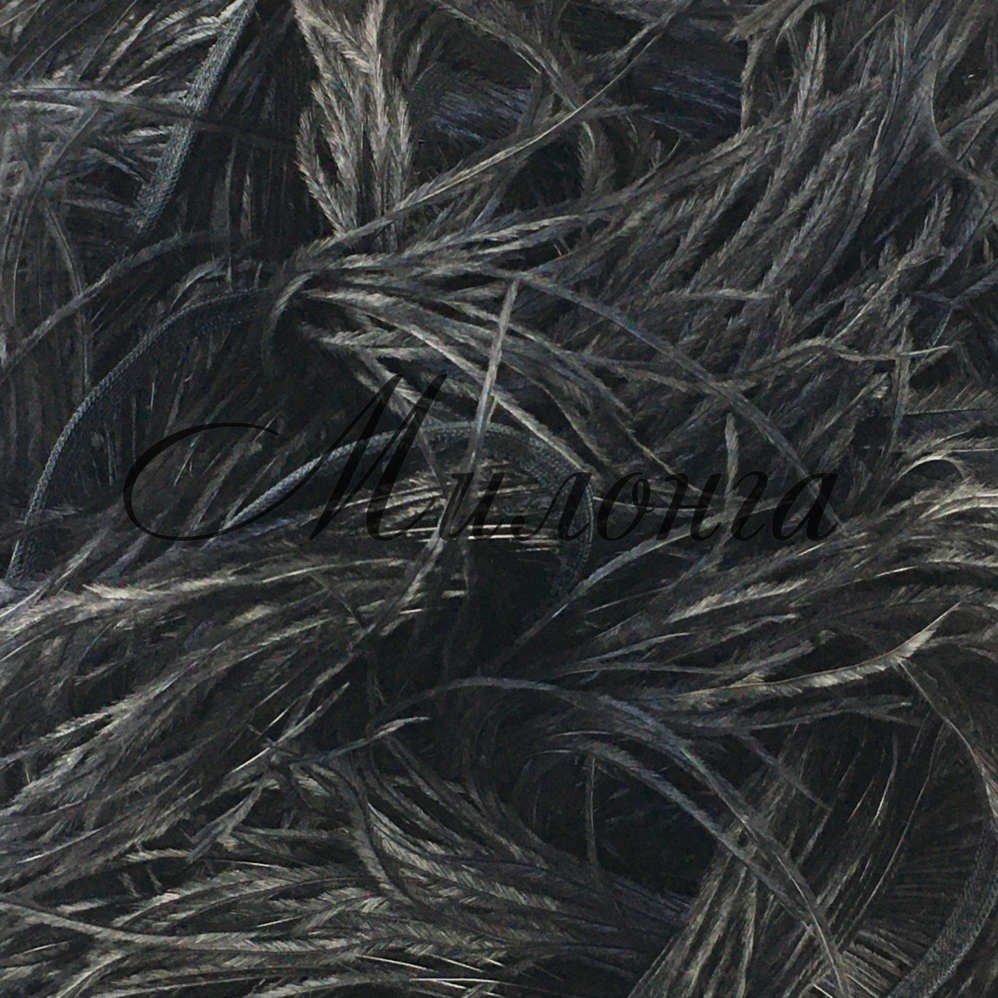 Перья страуса DSI Black