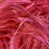 Boa DSI 5 Ply Fuchsia